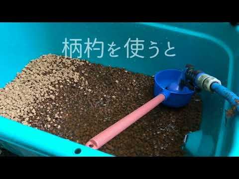 金魚の水槽【琉金】タライ立上げから引っ越し直前まで2017年9月4日