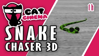 Video for Cats - Snake Chaser 3d (1 hour version) by Cat Cinema