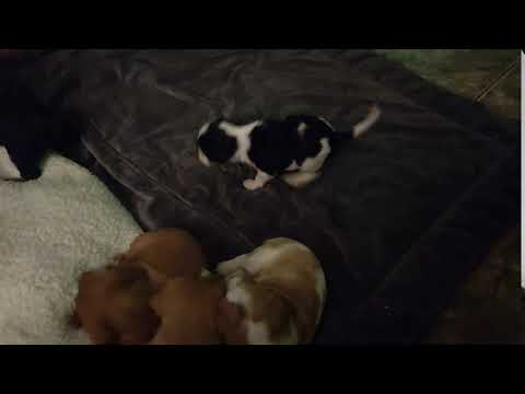 Puppy Chases Down Sister