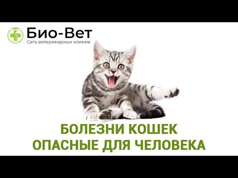 Болезни Кошек Опасные Для Человека / Топ-8 Заразных Болезней От Кошки / Ветклиника Био-Вет