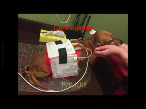 help for my paralyzed dog