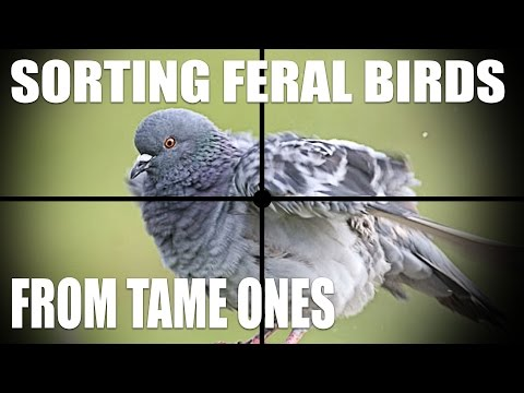 Sorting Feral Birds from Tame Ones