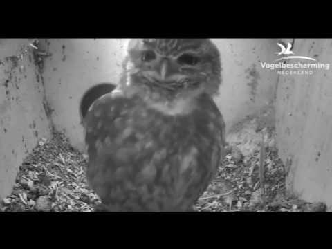 Male in Nest Box - 21.03.17
