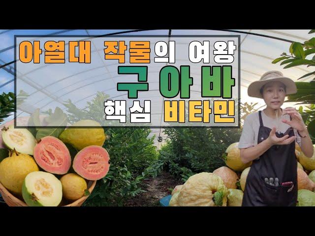 비타민을 품은 여왕, 구아바 5년차 이야기!