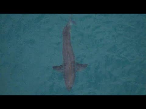 Αυστραλία: «Στα σαγόνια του καρχαρία» – Φονική επίθεση σε σέρφερ …