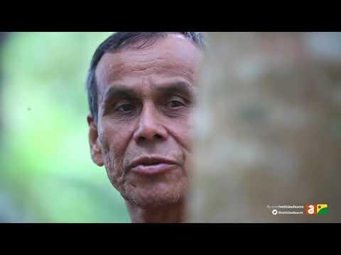 Acre Sustentável - Florestas Plantadas com Isaías Flores, em Assis Brasil