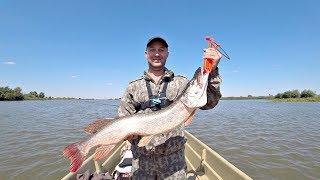 Рыбалка в зюзино астраханская область