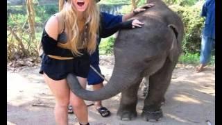 Gimme Gimme Good Lovin - Crazy Elephant