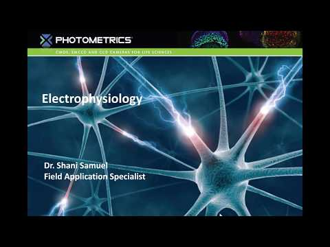Introduction to Electrophysiology - YouTube