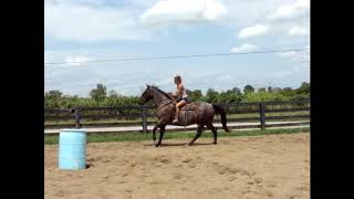 BIG THICK MADE BLUE ROAN QUARTER HORSE GELDING, USED FOR RANCH WORK AND TRAIL RIDING, THICK MADE, SM