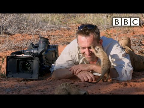 The Human Friendly Meerkats!