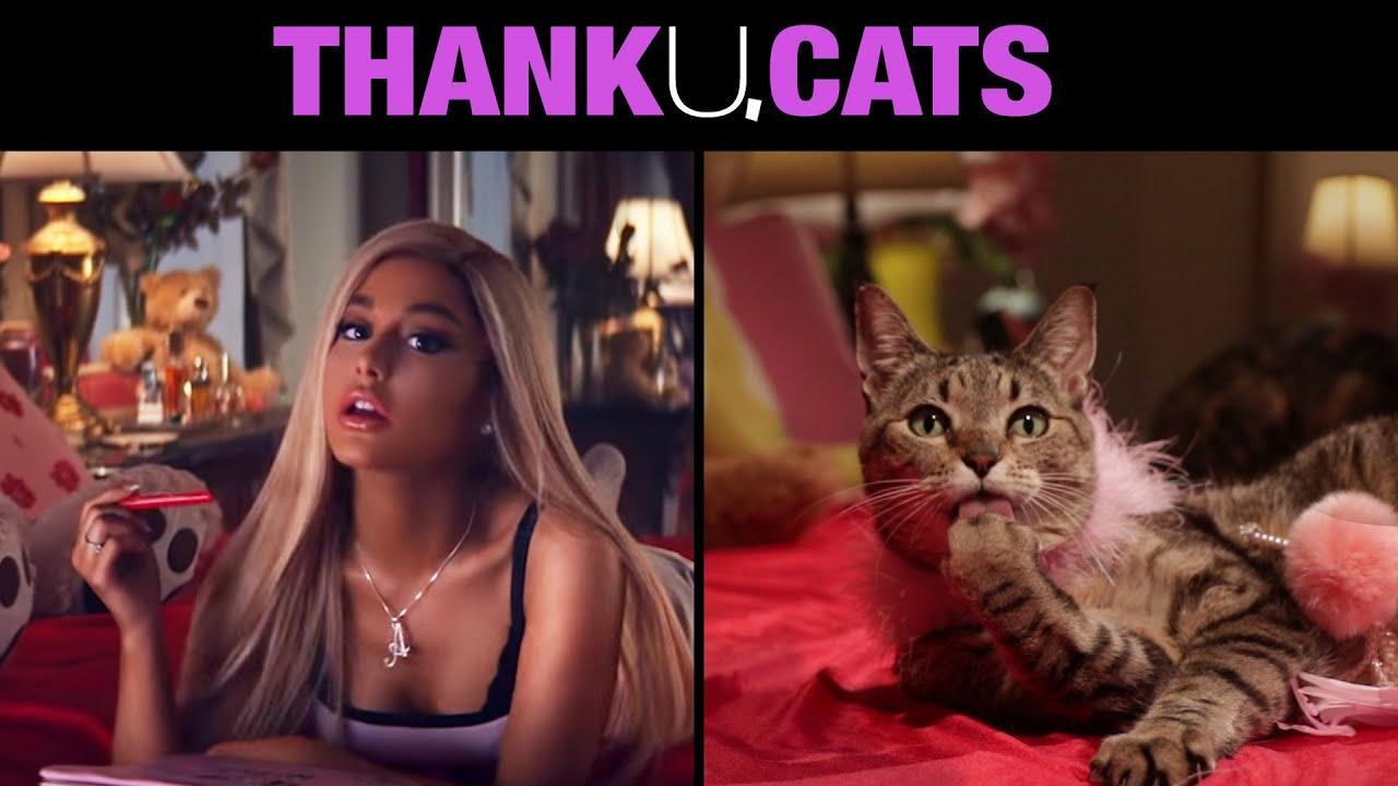 Thank U, Cats thumbnail