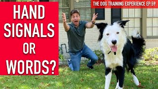 How one can Practice Your Canine to Do What the Heck You Need!