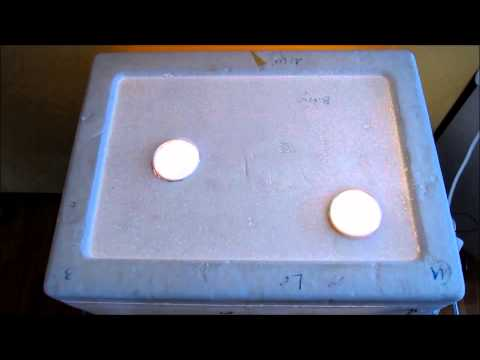 Brut Vorbereitung |Kunstbrut 4| Liste Eier markieren