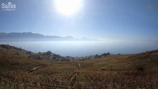 世界遺産ラヴォー地区のブドウ畑にレマン湖やアルプス絶景を車窓から【スイス情報.com】