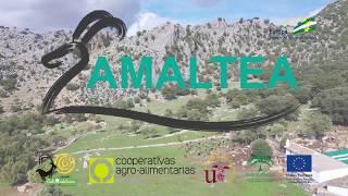 El Grupo Amaltea logra unificar los sistemas de gestión técnico-económica para caprino