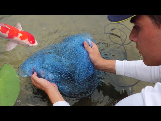 FISH-NET FEEDS JAWS THE POND MONSTER!!