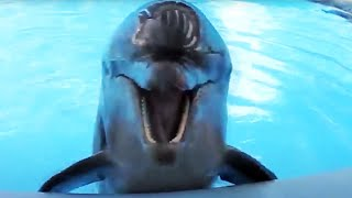 Amazing Dolphins - Funny And Cute Doplhins Compliation [Funny Pets]
