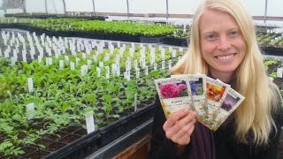 Flower Seeds to Direct Sow in Short Seasons