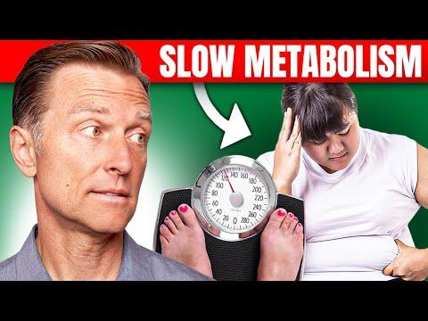 How to Fix a Slow Metabolism - myoblast.wordpress.com