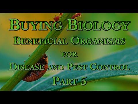 Cysticerci uri ng parasito