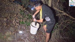 07 | Cắm Câu Cá Lóc Bằng Mồi Nhái Cực Kì Hiệu Quả | Fishing