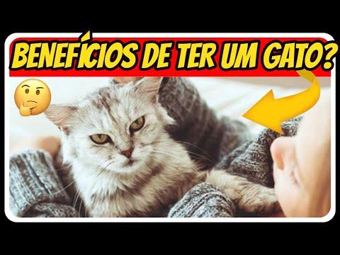 TOP 10 BENEFCIOS DE TER UM GATO EM CASA |  GATOS
