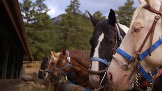Horseback Riding In Rocky Mountain National Park