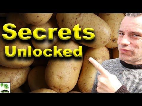 , title : 'Potato Varieties - Explained 101