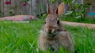 Backyard Critters   Videos for Dogs, Cats, and more