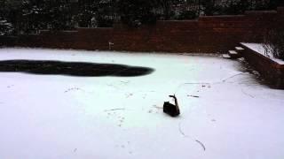 Первый снег…