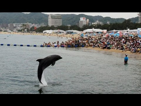 須磨海岸でイルカがジャンプ