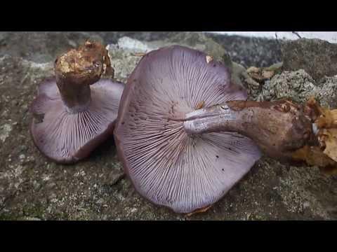 Gusci di pinoli sulle articolazioni