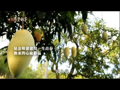 農業故事館-金煌芒果
