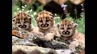 Jimmy Buffett - Wonderin' Where The Lions Are.wmv
