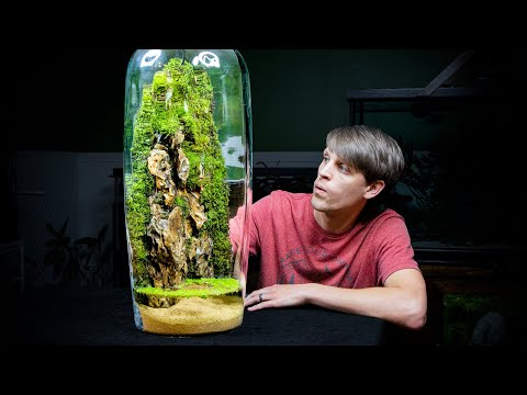 , title : 'Giant Moss Dripwall Terrarium with a Pond