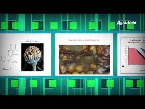 Hpv vírus és mellékhatások
