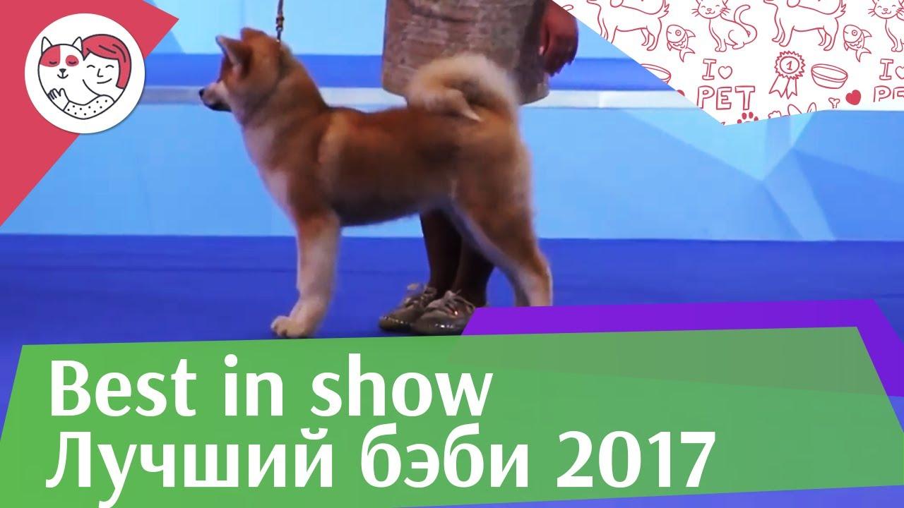 Best in show Лучший бэби 18 марта на Евразии 17 ilikepet