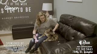 Pet Spotlight: Meet Ginger