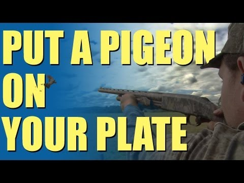 Fieldsports Britain – Pigeon shooting perfection + recipe