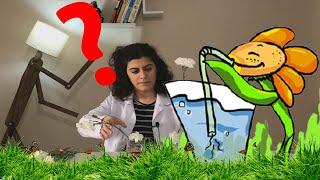 Bitkiler su içer mi?