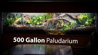 I Built a 500 GALLON PALUDARIUM at Pondemonium