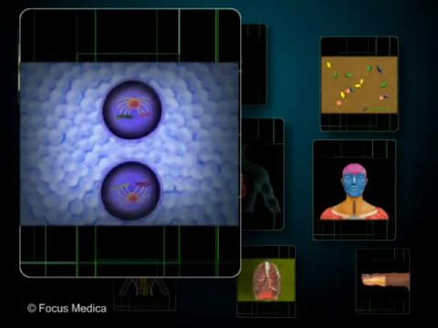 Video of Anatomy Atlas - Animated