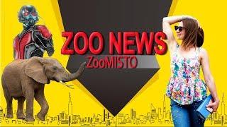 Муравей-грабитель и слоны у басейна | Новости из мира животных #24 | ZooMisto
