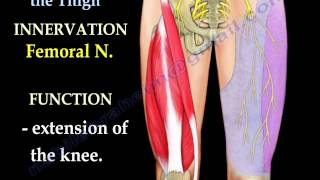 Anatomy Of The Thigh - Everything You Need To Know - Dr. Nabil Ebraheim