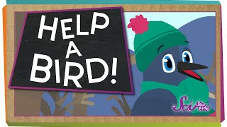 How to Help a Bird! | Animal Science for Kids