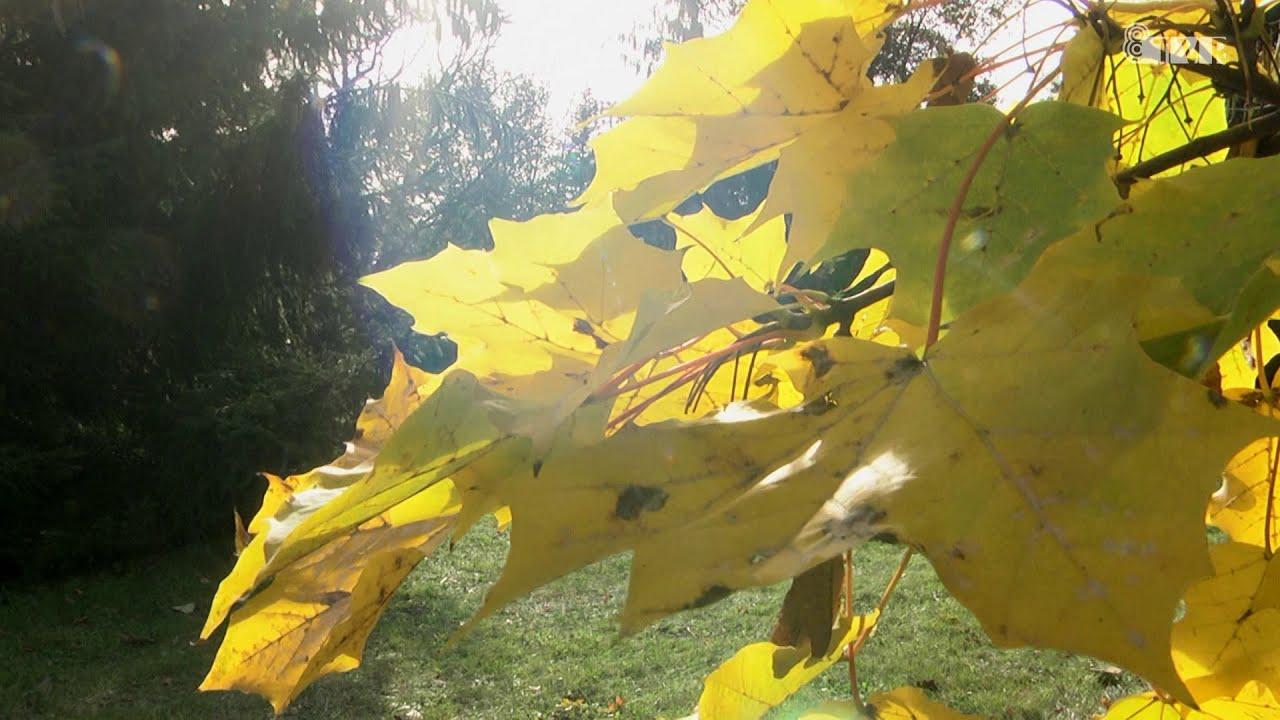 Impresja Jesienna w Sieradzu
