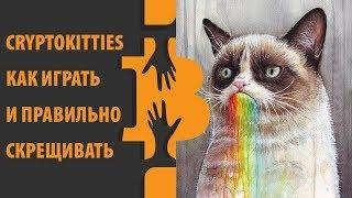 Cryptokitties – крипто котики, как играть?