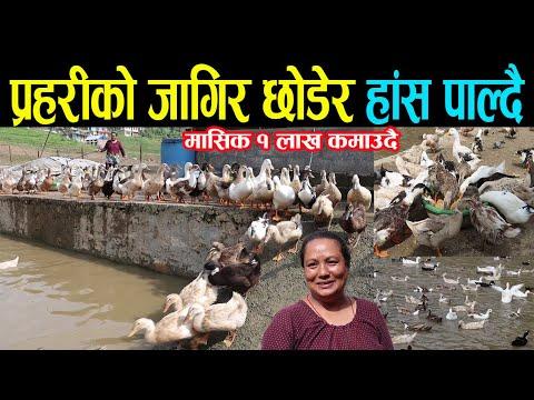 नेपाल प्रहरीको जागिर छोडेर हाँस पाल्दै| मासिक १ लाख कमाउदै| एक सजिलो ब्यवसाय | Duck Farming in Nepal