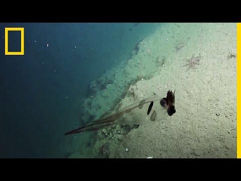 átlátszó parazita vízben férgek megjelenése a kezelés után